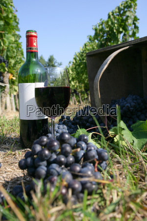 bunch, of, grapes, and, a, glass - 2898327