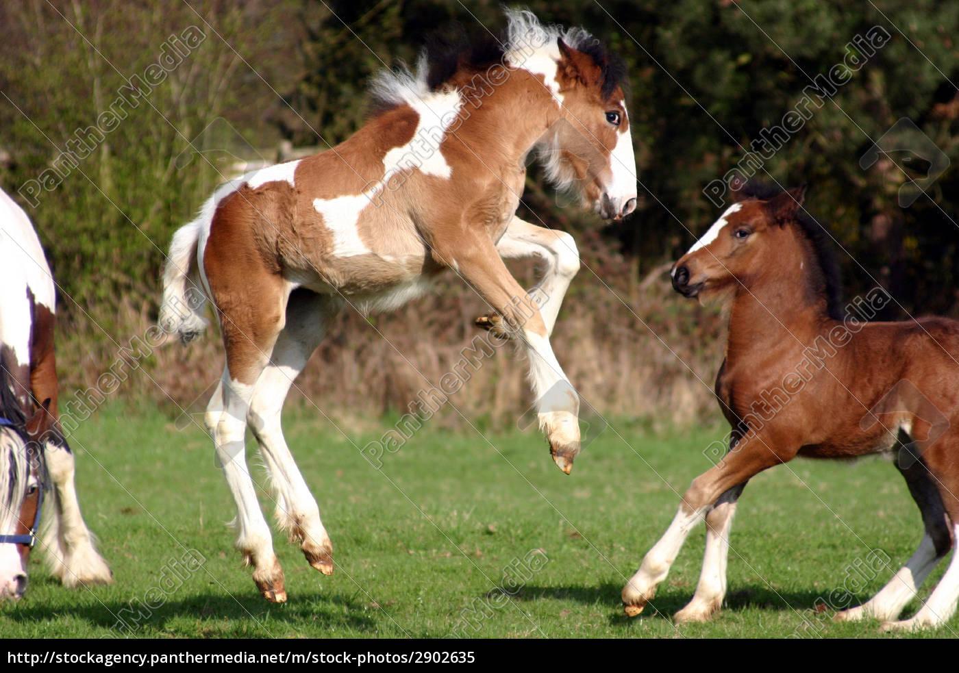 spring, alive, foal, in, spring - 2902635