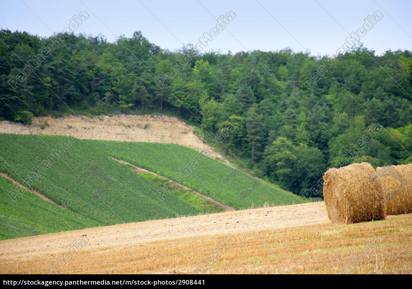 field, of, agriculture - 2908441
