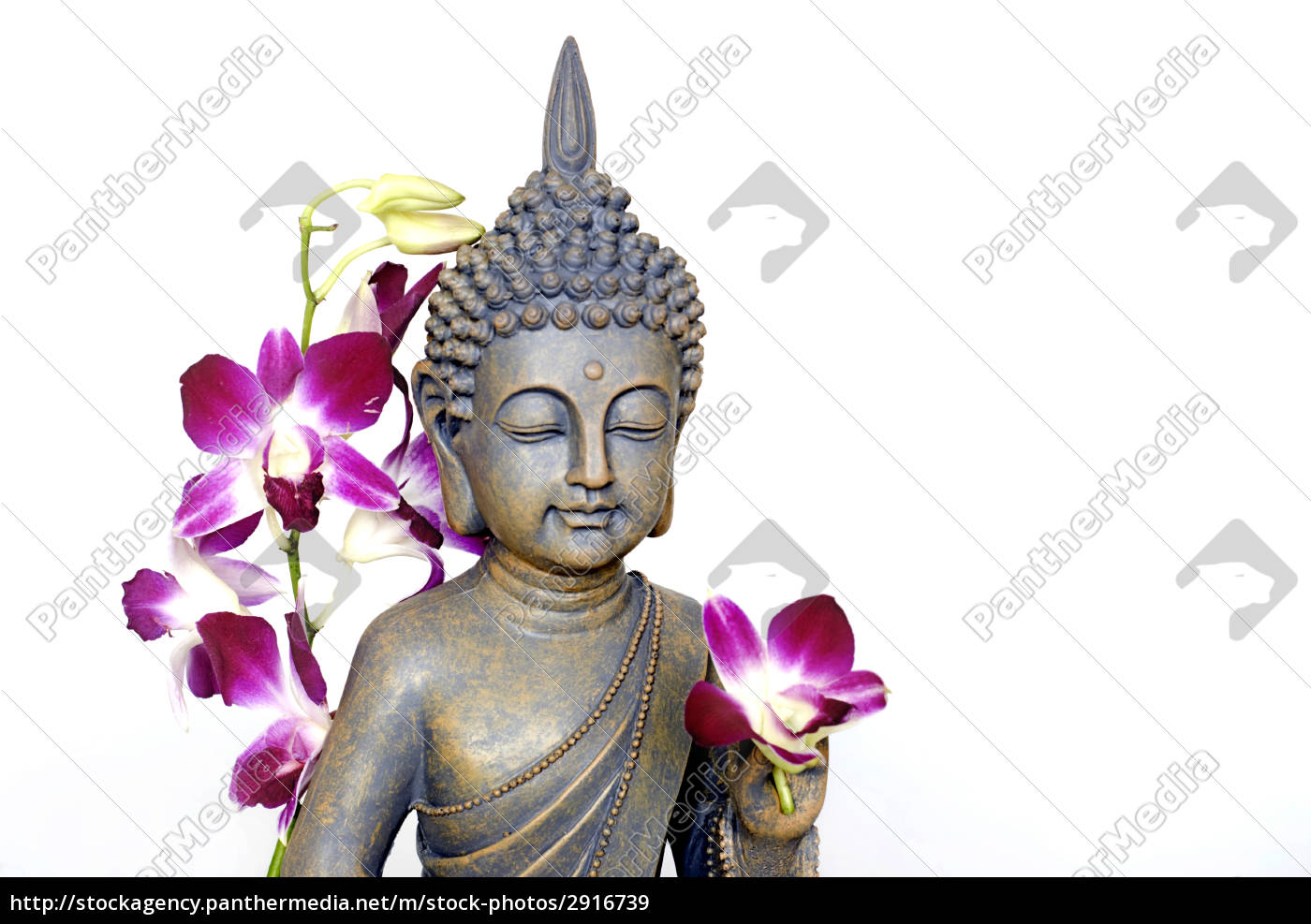 buddha, and, orchid - 2916739