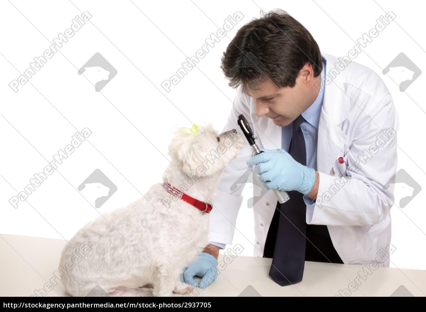 vet, checks, dogs, eyes - 2937705