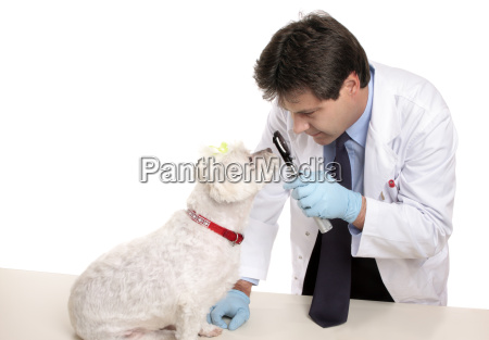 vet, checks, dogs, eyes - 2937705