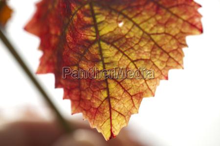 grape, harvest - 2944271