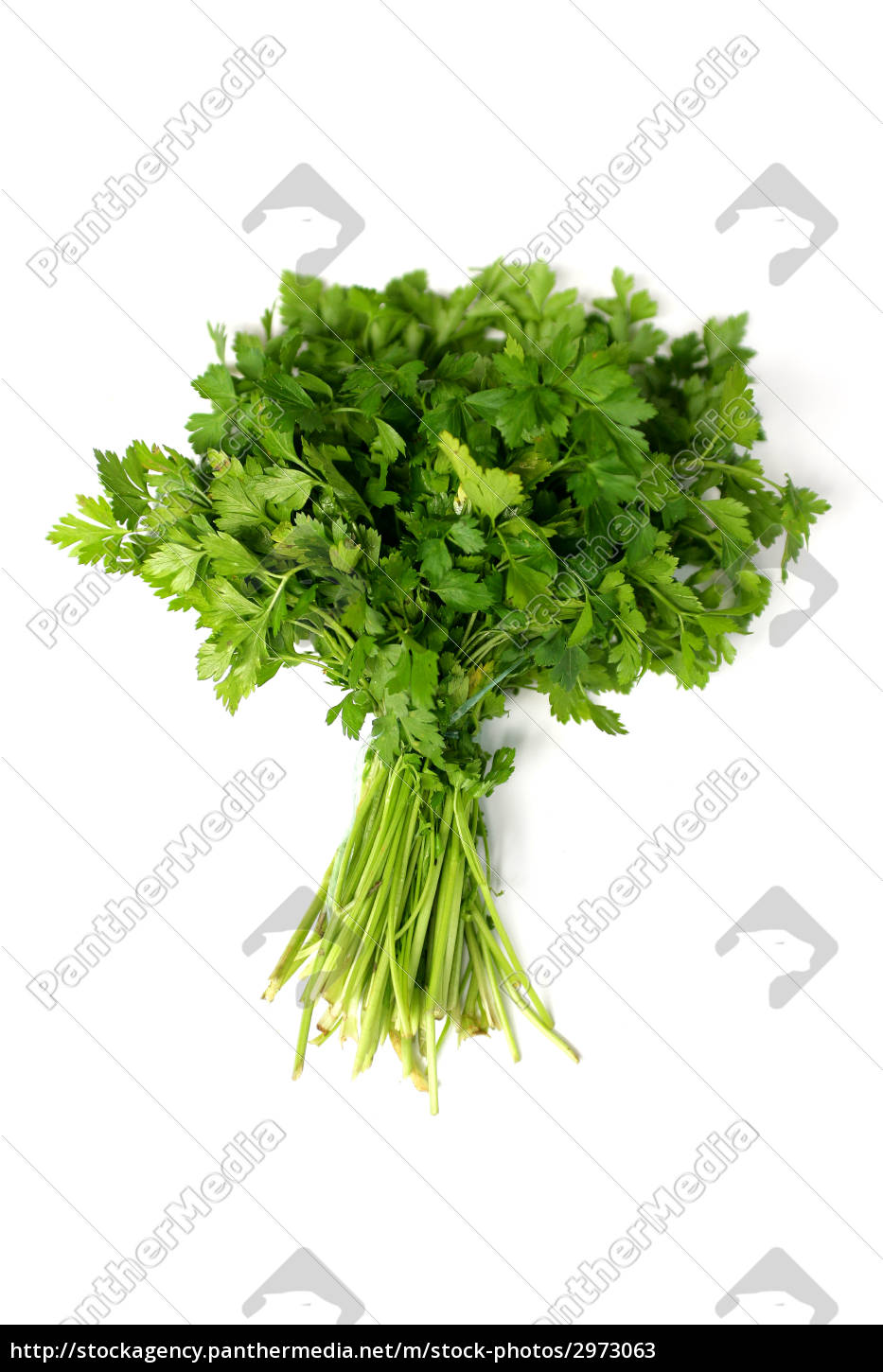 aromatic, vegetable, parsley, plant, aromatic plant, bunch of parsley - 2973063