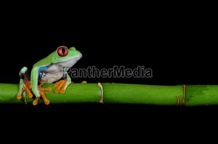 frog - 2976403