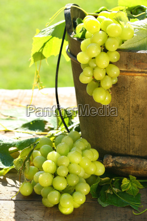 green, grapes, and, leaves - 2986397
