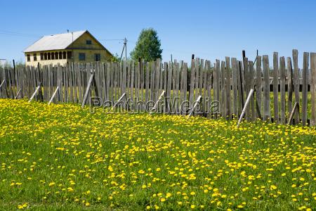 summer in village