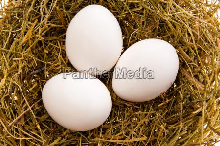 three, white, eggs, in, a, nest - 2988157