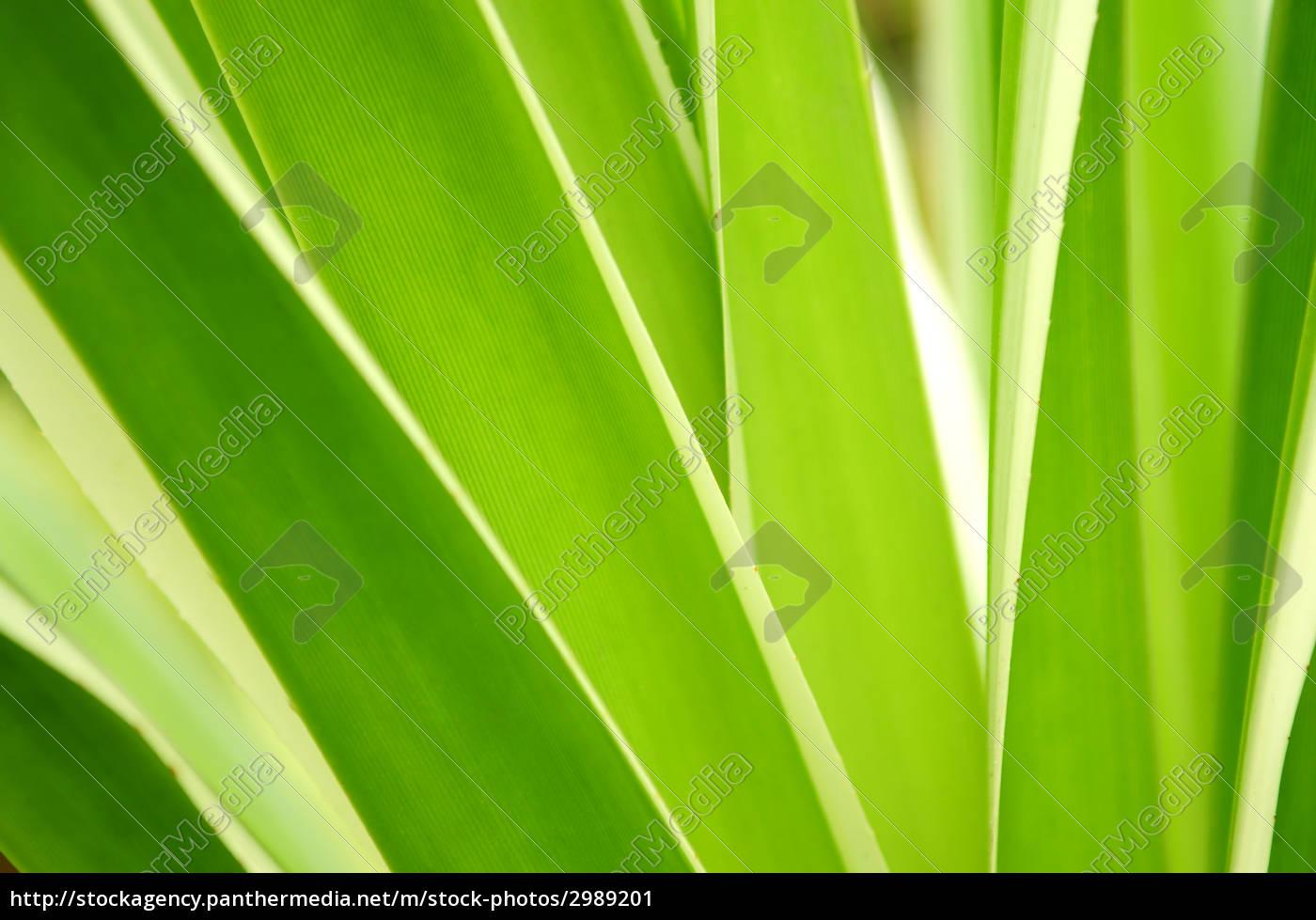 tropical, leaves - 2989201