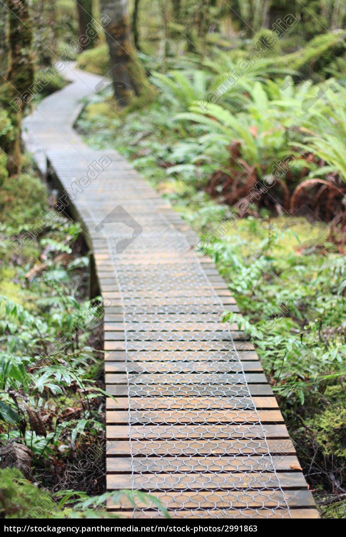beautiful, beauteously, nice, green, hike, go hiking - 2991863