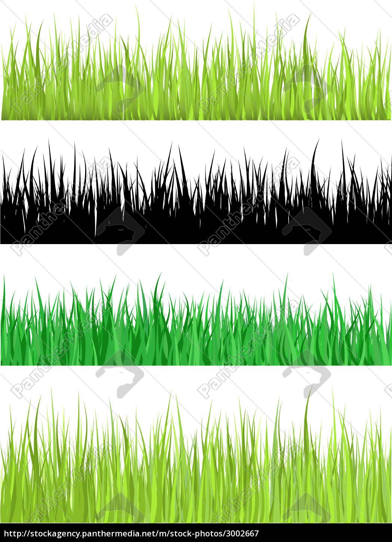 detailed, grass - 3002667