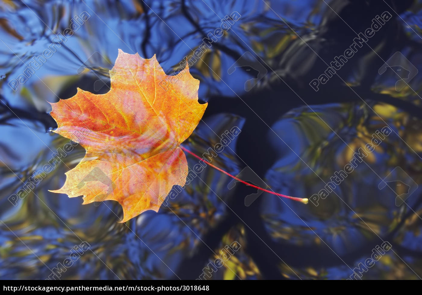 autumn, leaf, on, the, water - 3018648