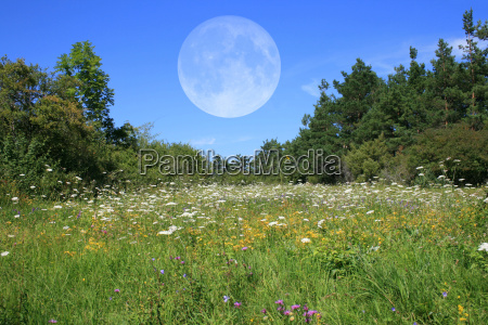 meadow with moon