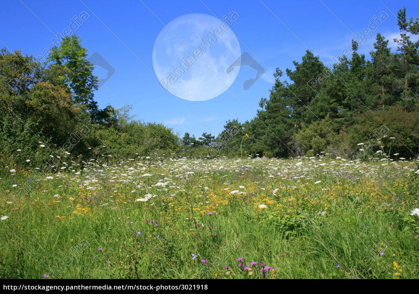 meadow, with, moon - 3021918