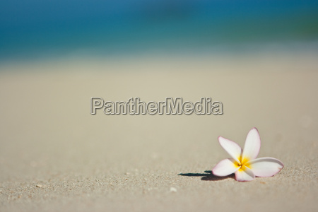 travel, holiday, vacation, holidays, vacations, flower - 3021726