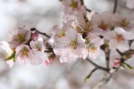 spring - 3026448