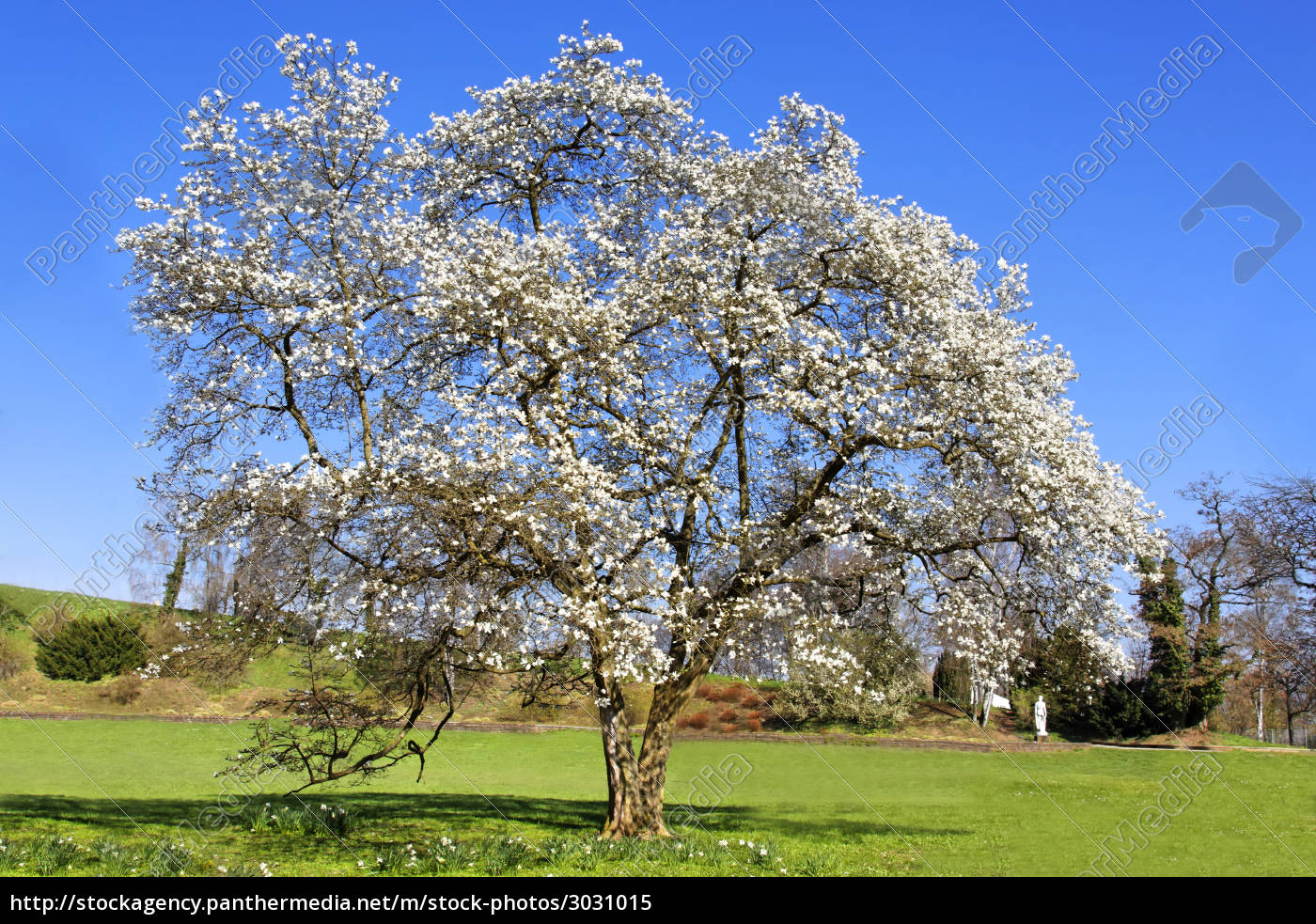 tree - 3031015
