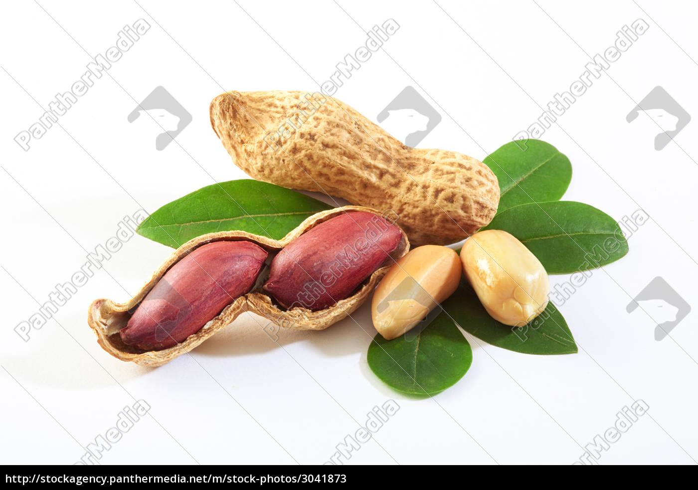 peanuts - 3041873