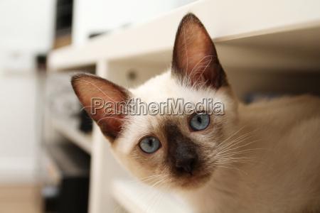 eyes blank european caucasian cement blueness