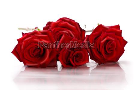 four, rosen, wd670 - 3053660