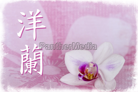 orchid chinese symbol for orchide