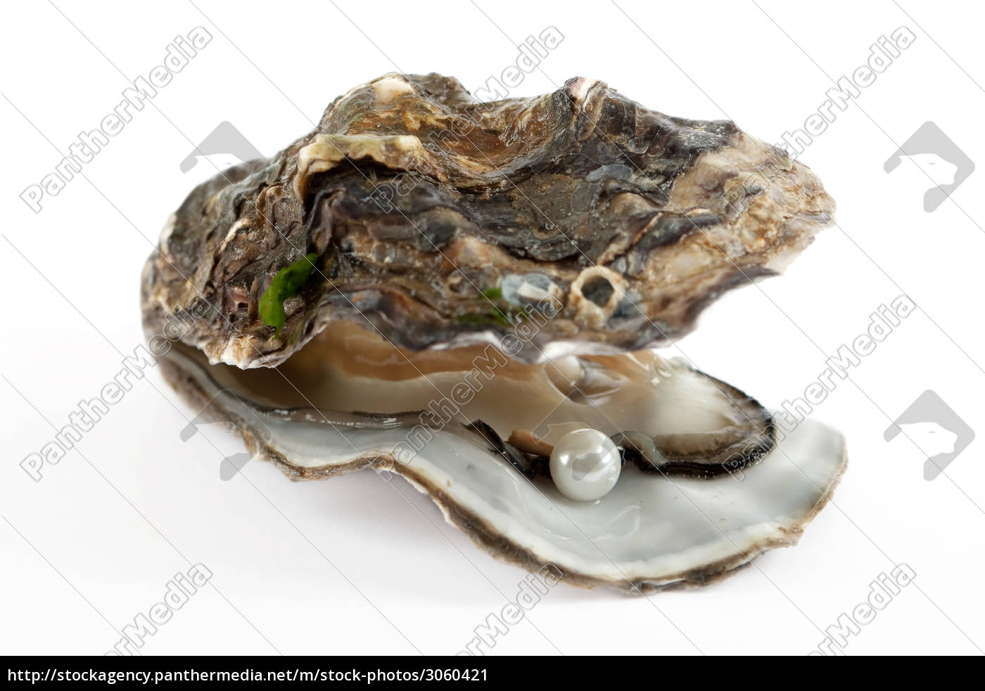 oyster, with, pearl - 3060421