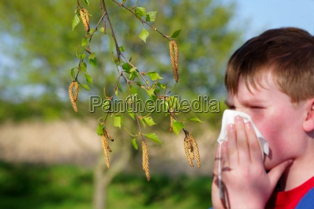 allergy to birch pollen