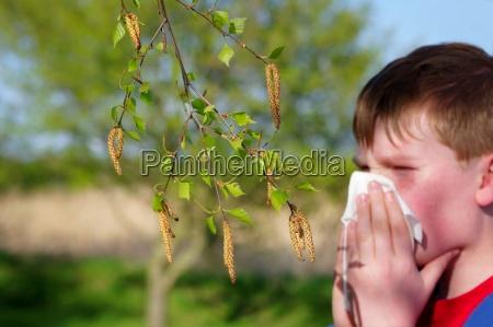 allergy, to, birch, pollen - 3062741