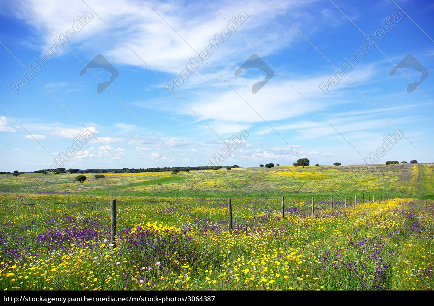 colored, field, at, portugal. - 3064387