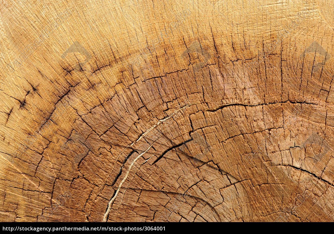 oak, wood - 3064001