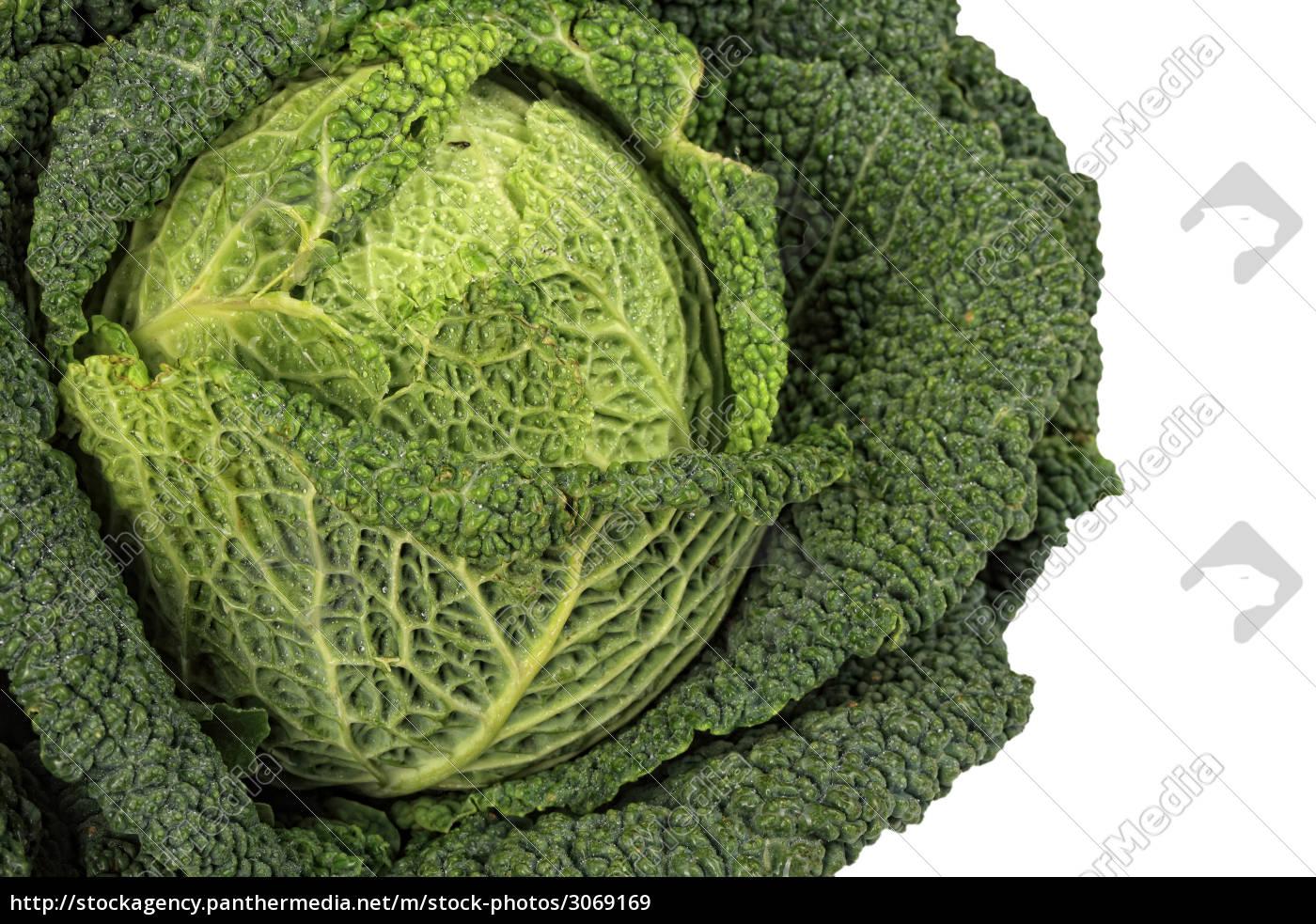 savoy, cabbage, closeup - 3069169