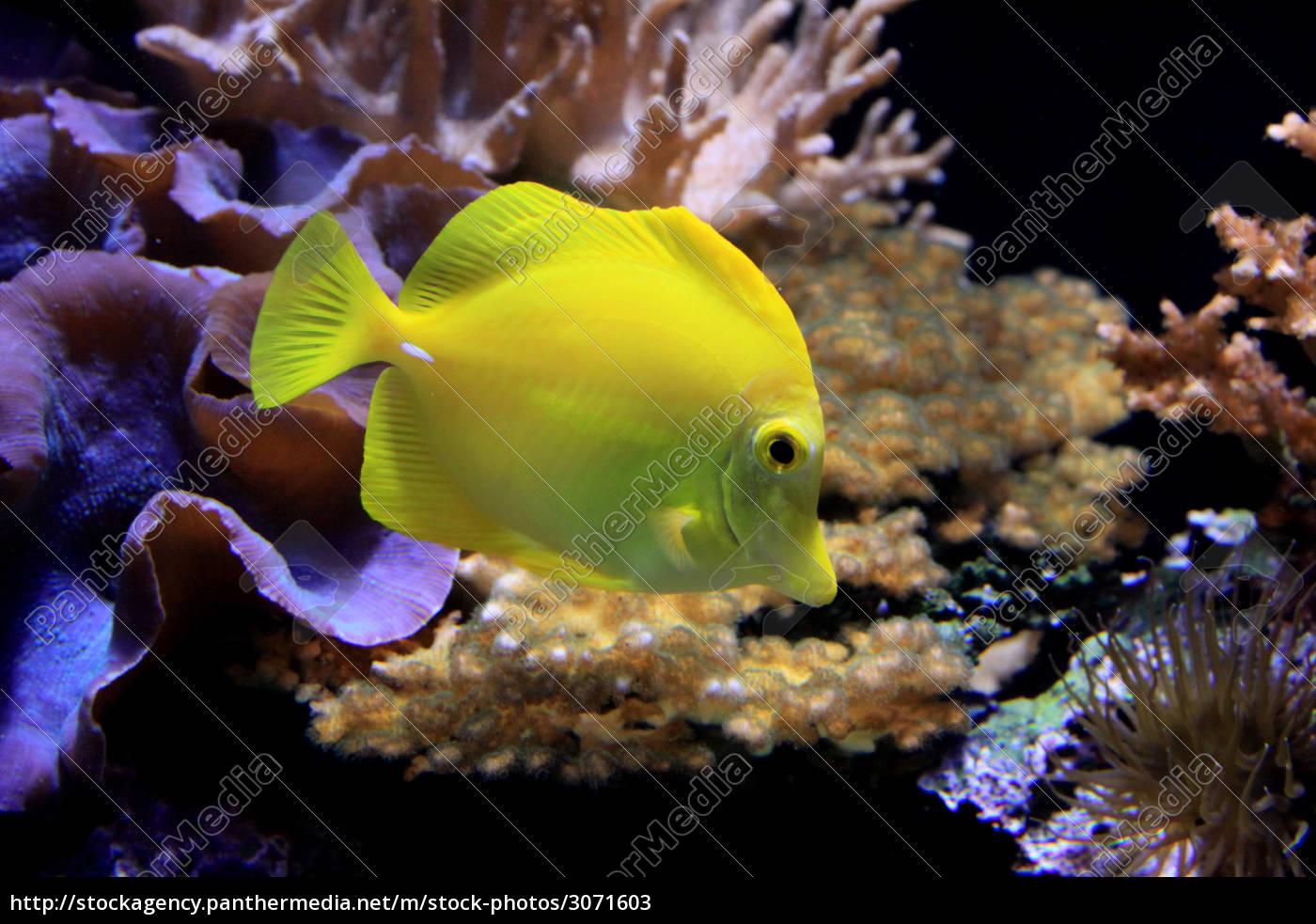 in, aqauarium - 3071603