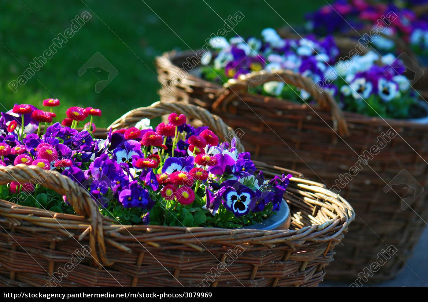 basket, of, spring, flowers - 3079969