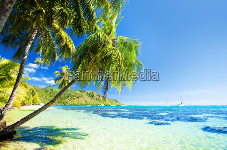 palm, tree, hanging, over, blue, lagoon - 3082731