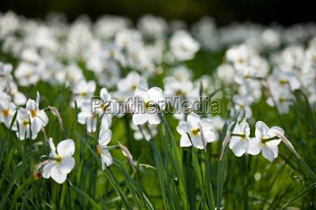 flower plant field blank european caucasian