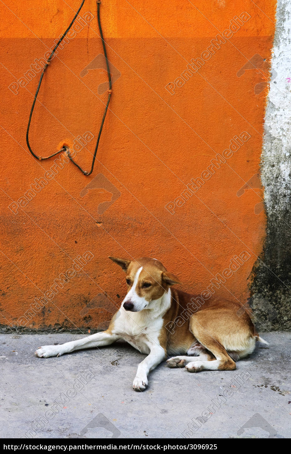 dog, near, colorful, wall, in, mexican - 3096925