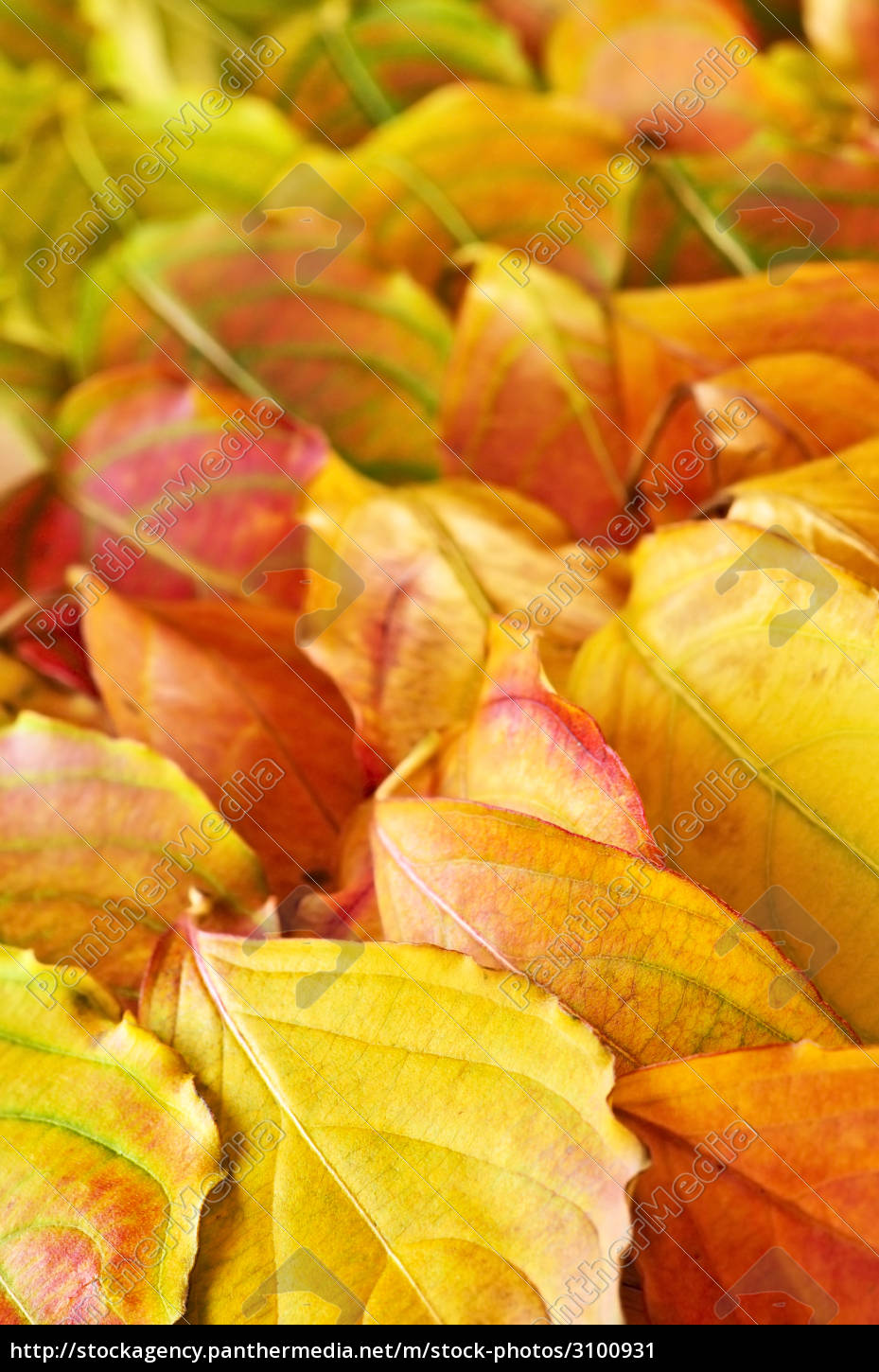 autumn, leaves, background - 3100931