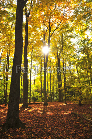 fall, forest - 3107153