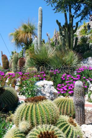 exotic, garden - 3108907