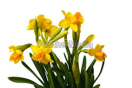 spring - 3111137