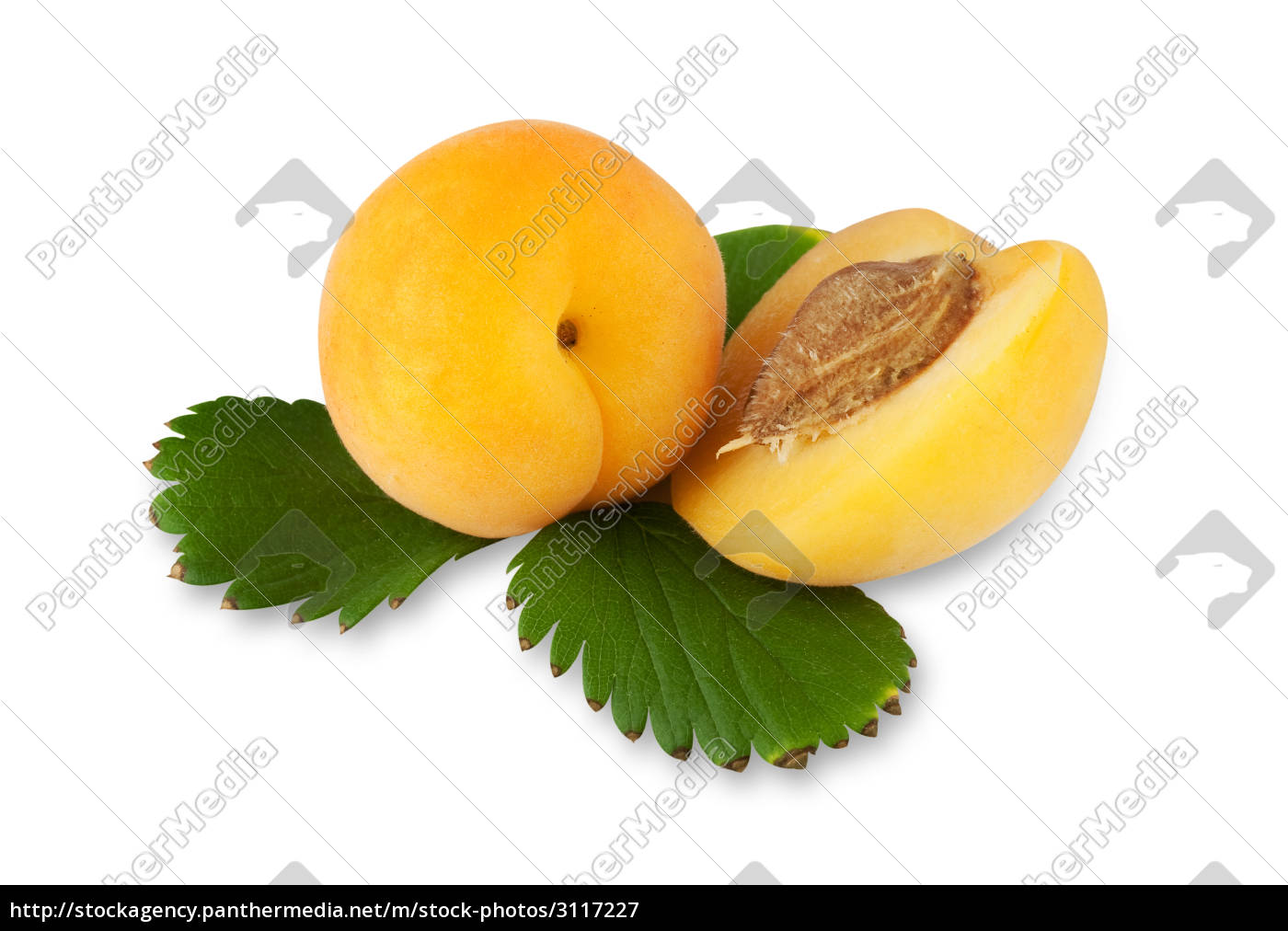 apricots, with, an, exact, pruning, path - 3117227