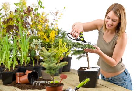 gardening, -, woman, trimming, bonsai, tree - 3122157
