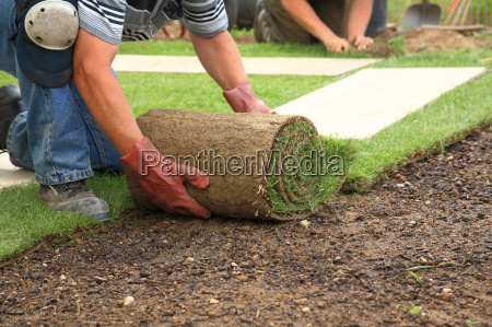 laying, sod, for, new, lawn - 3125349