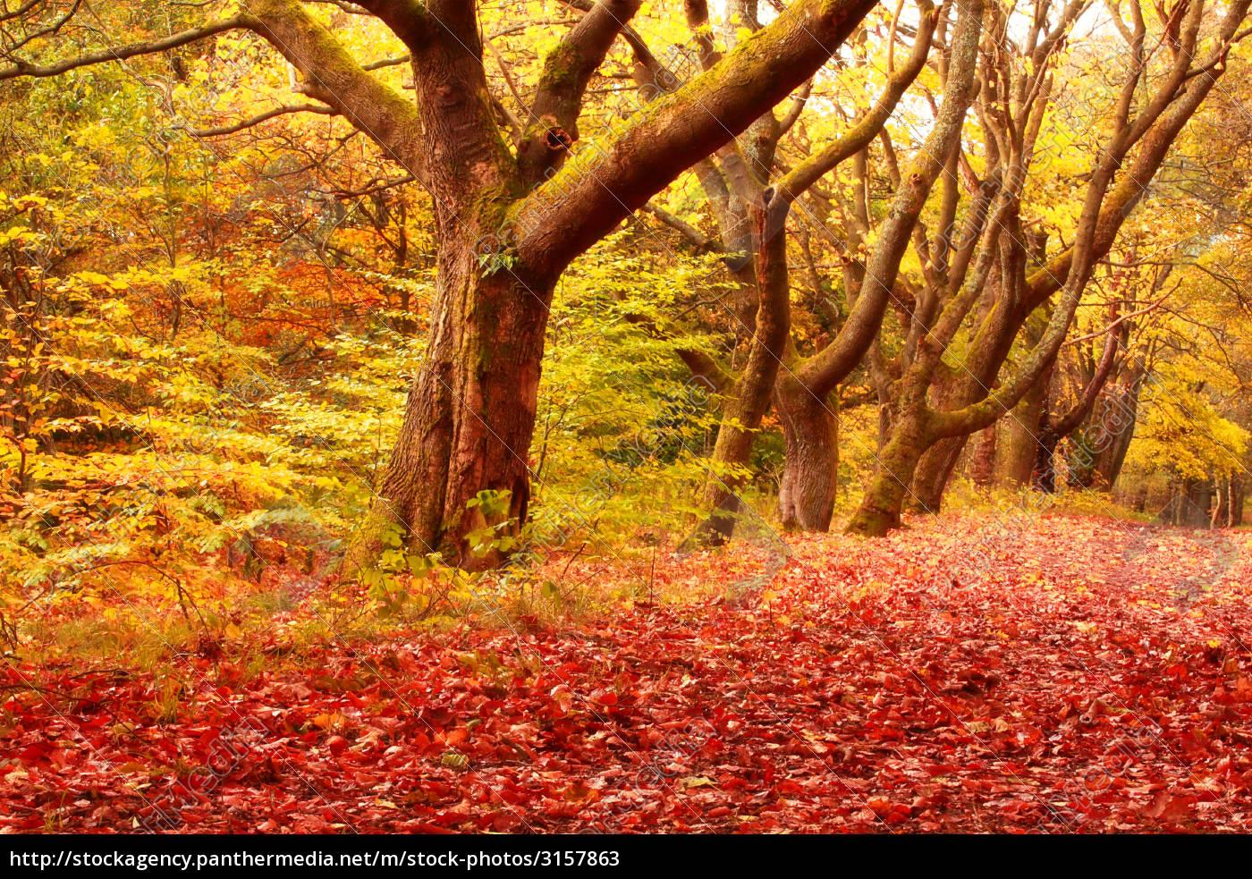 autumnal, road - 3157863