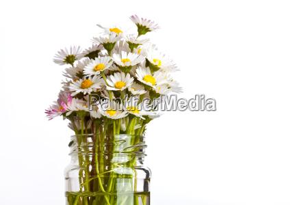 daisy ini glass