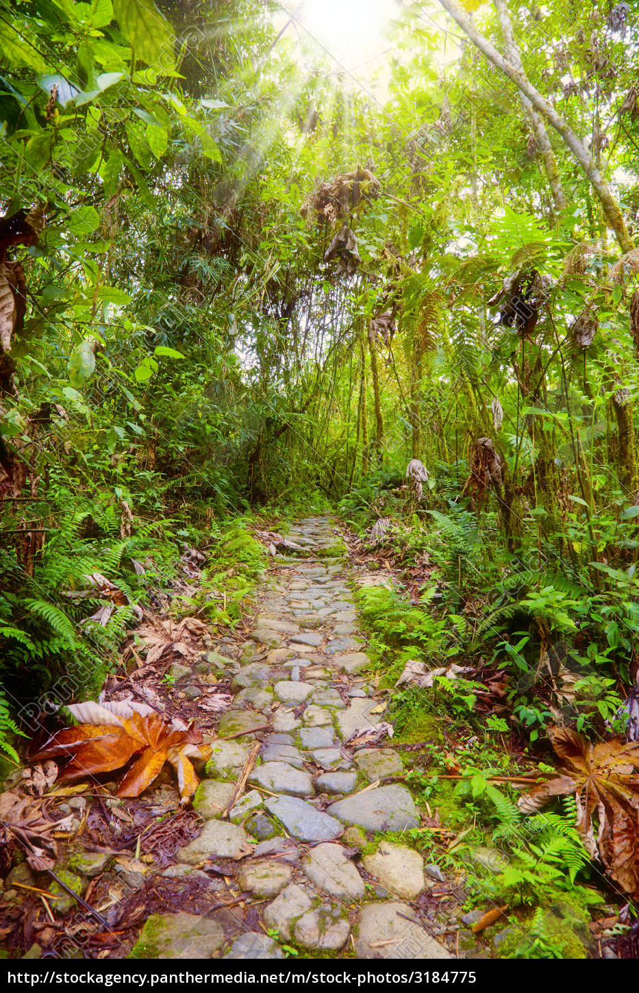 footpath, in, the, jungle - 3184775