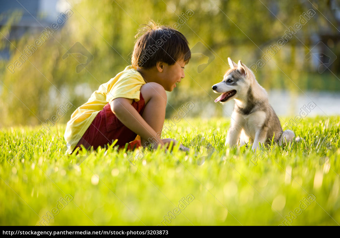 asian, boy, playing, with, puppy, on - 3203873