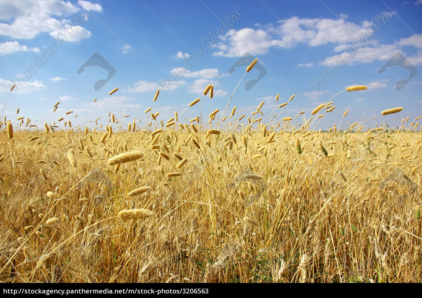 wheat, fiel, at, portugal. - 3206563