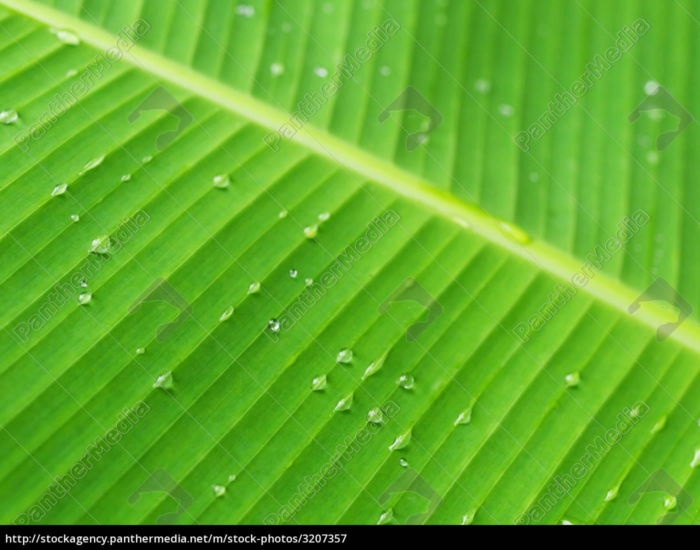 banana, leaf - 3207357