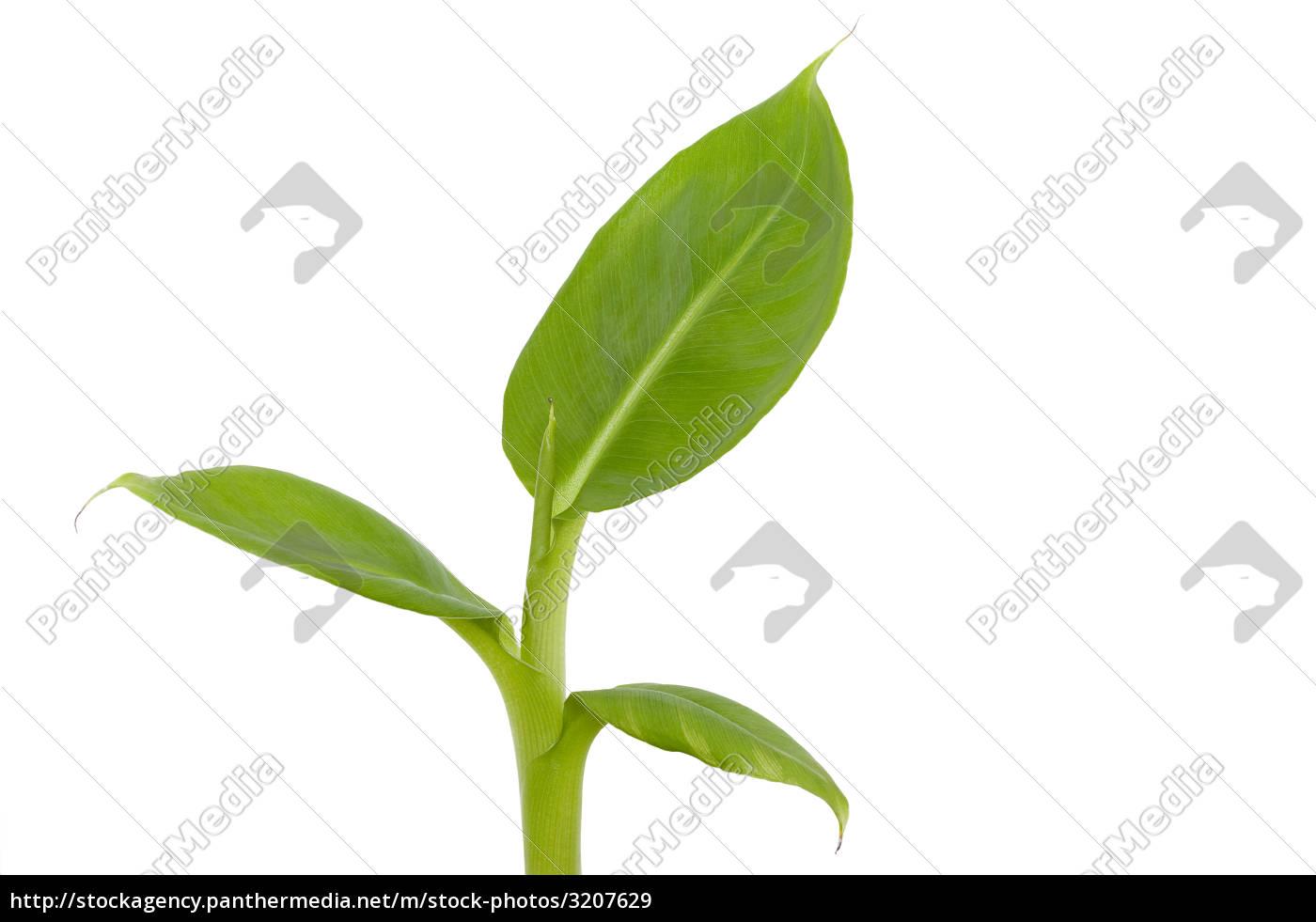 growth - 3207629